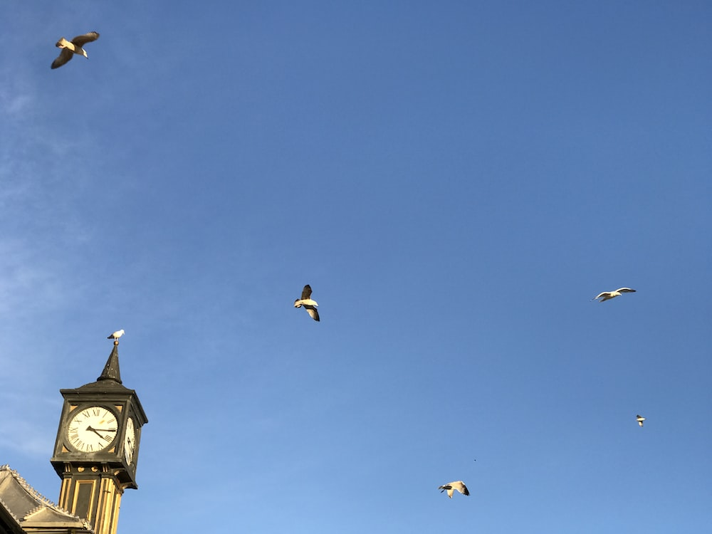 birds flying over the building during daytime