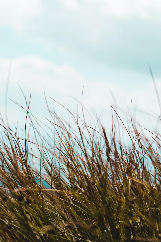 green grass under white sky during daytime