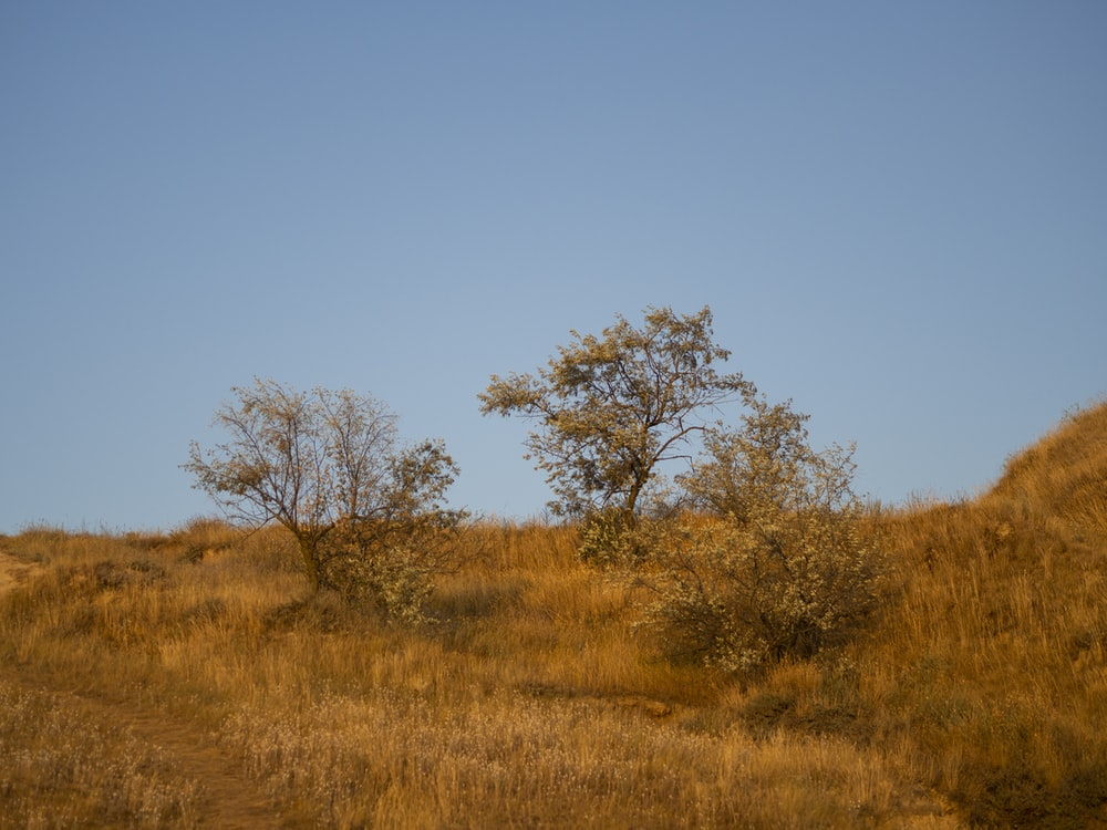 brown grass field with leafless trees