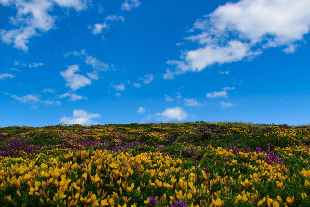 yellow flower field under blue sky during daytime