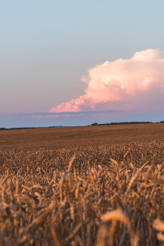 brown grass field under white clouds during daytime