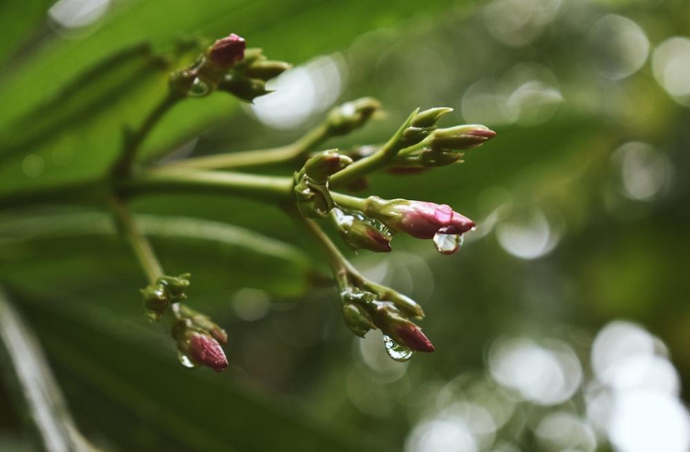 red and green flower buds in tilt shift lens