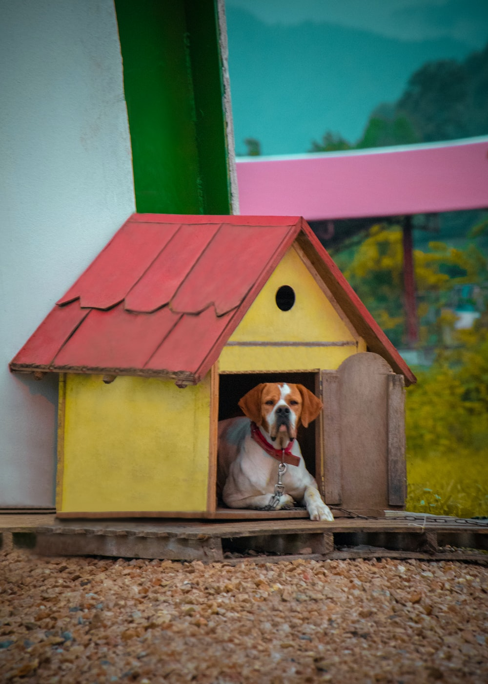 brown and white short coated dog on red and green wooden house