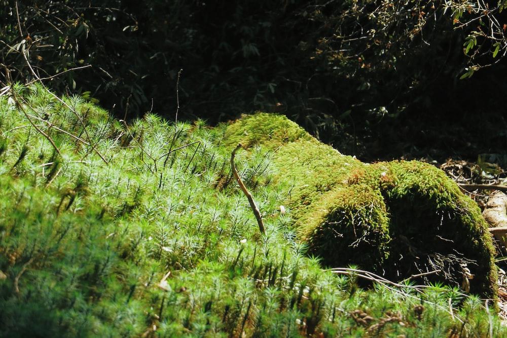 green grass on brown soil