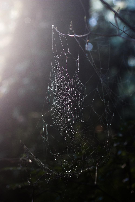 spider web on brown grass during daytime