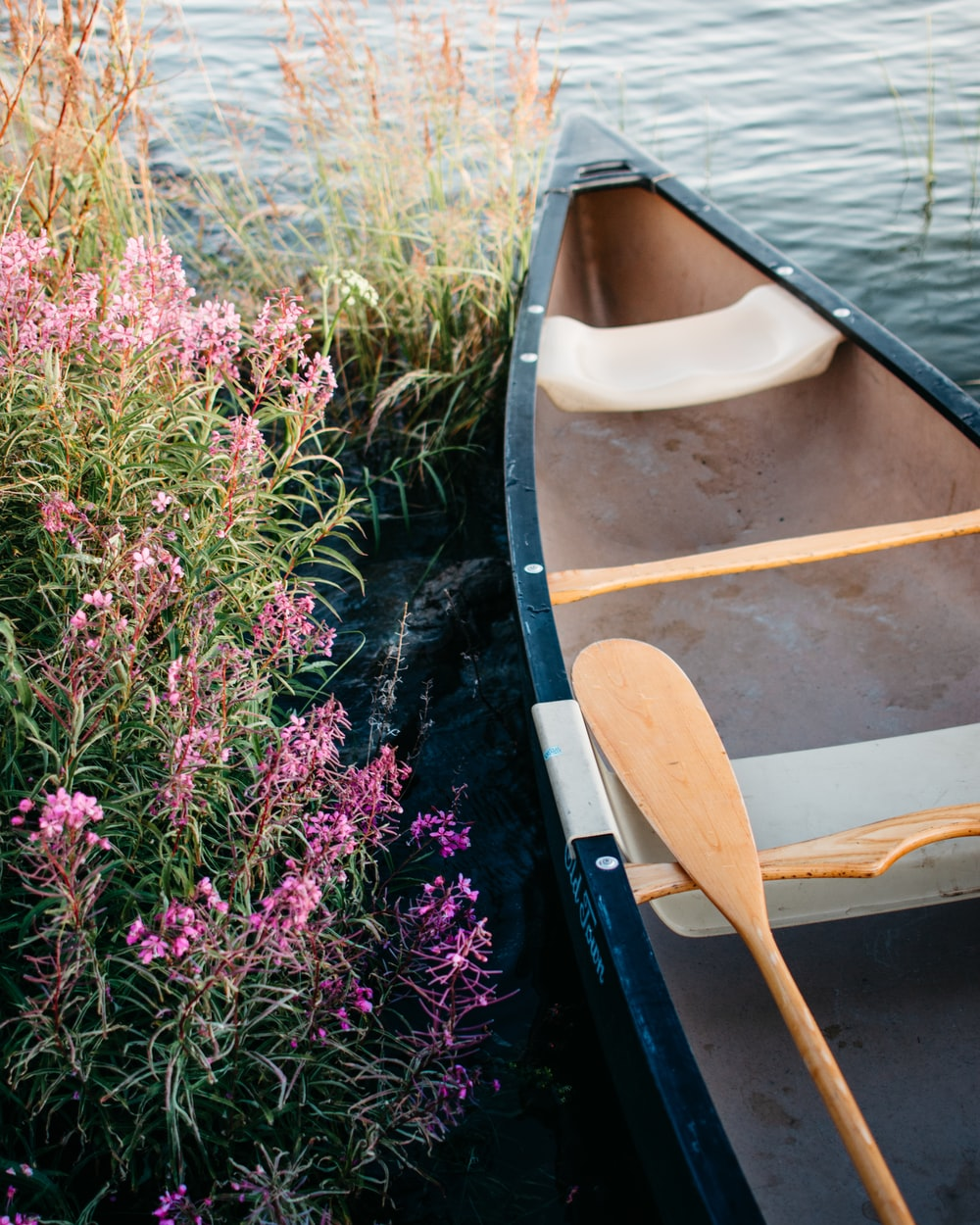 brown wooden boat on pink flower field during daytime