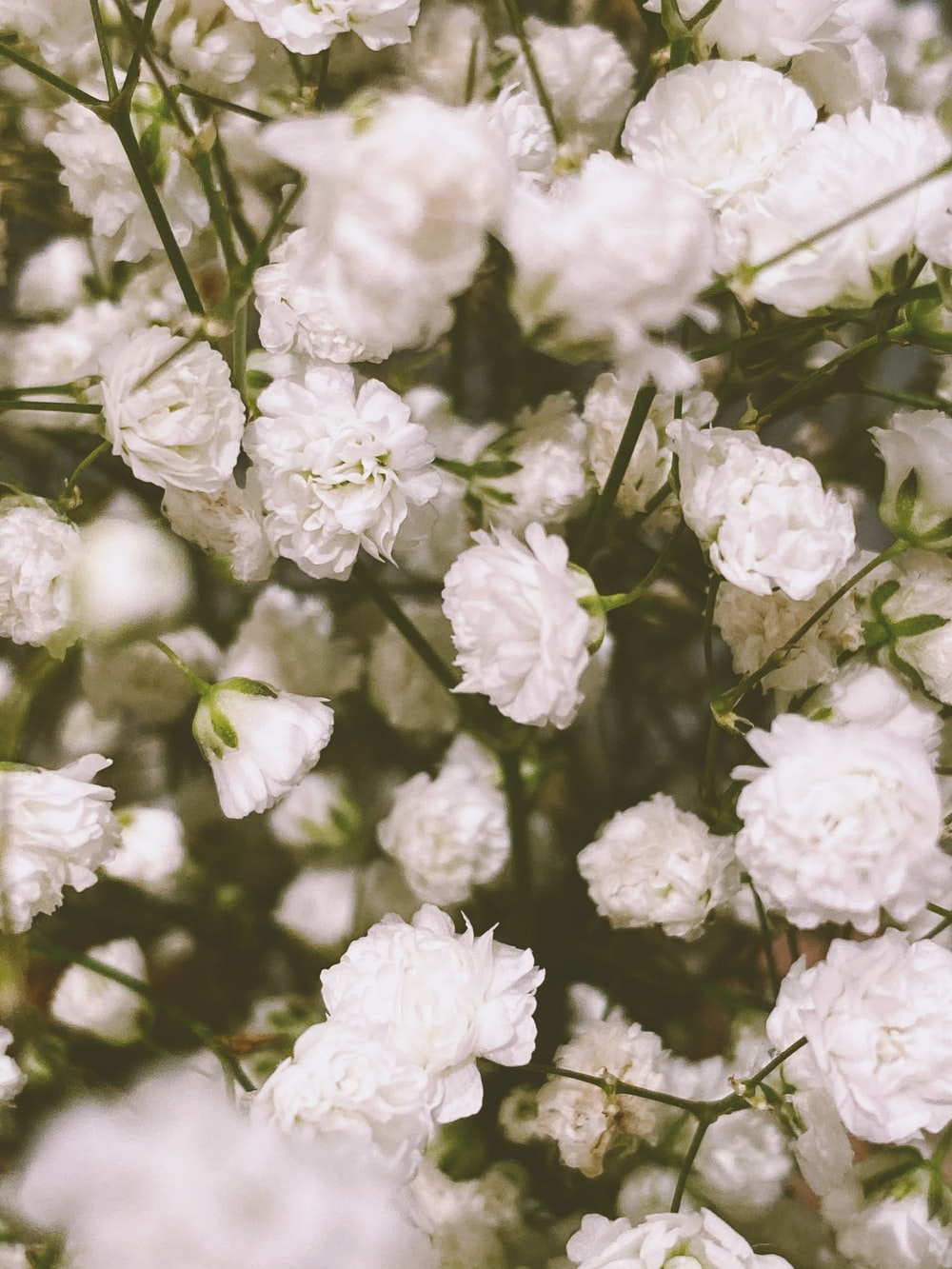 500+ White Flowers Pictures | Download Free Images on Unsplash