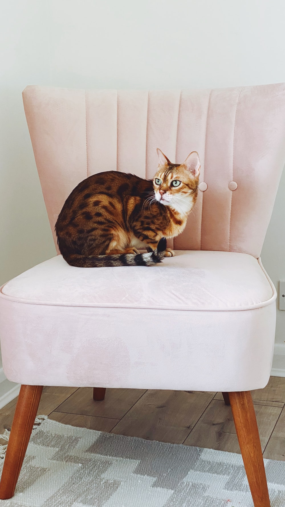 brown and black cat on white ottoman