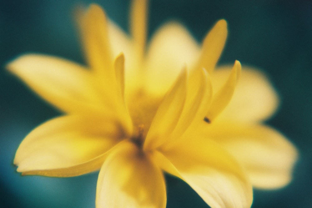 yellow and white flower in macro lens photography