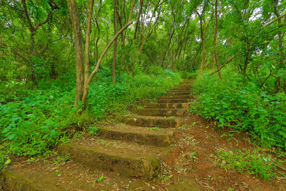 brown concrete stairs between green trees during daytime