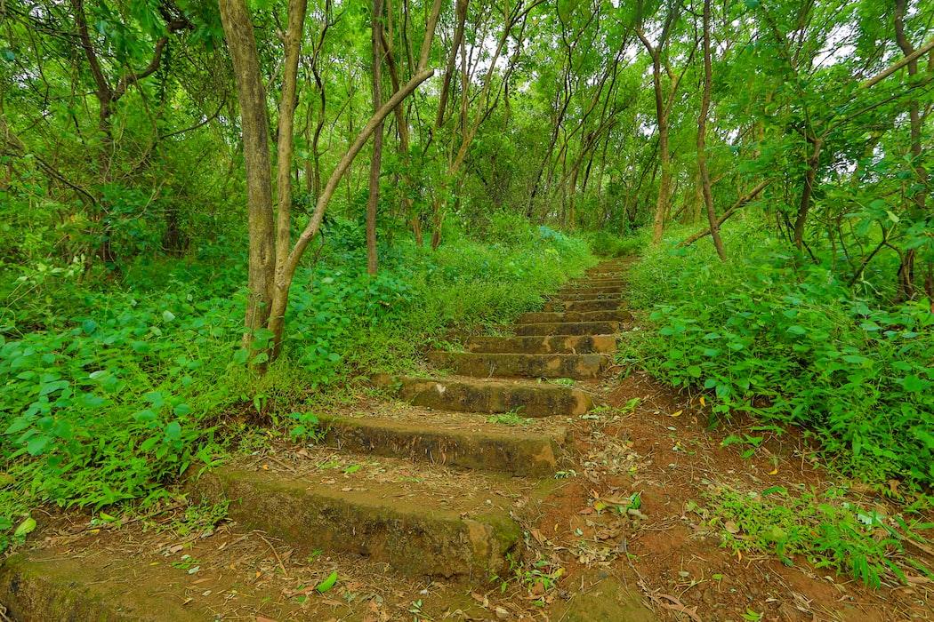 Los Gatos Creek Trail