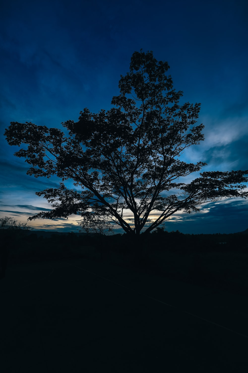 silhouette of tree under blue sky during night time