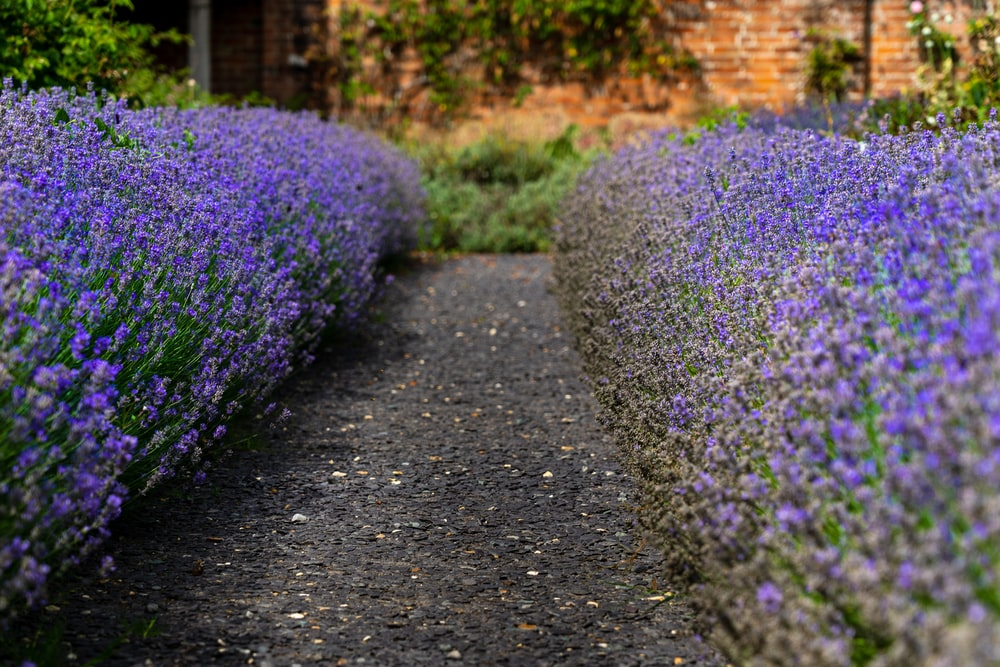 purple flowers on gray concrete road during daytime
