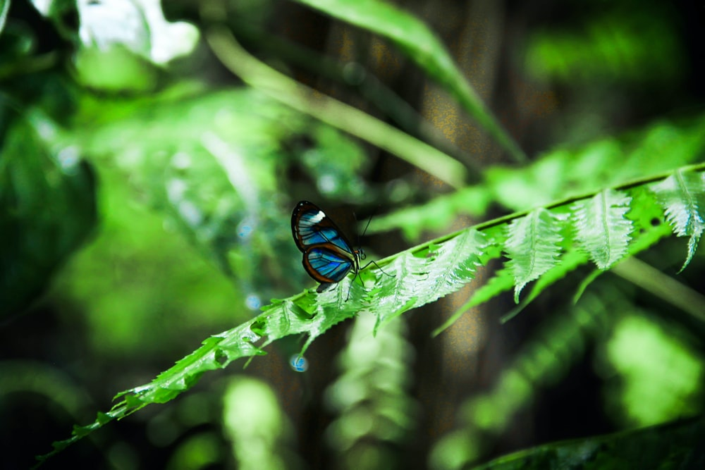 blue and black butterfly perched on green leaf in close up photography during daytime