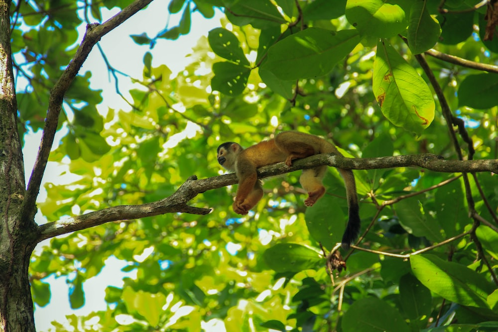 brown monkey on green tree during daytime