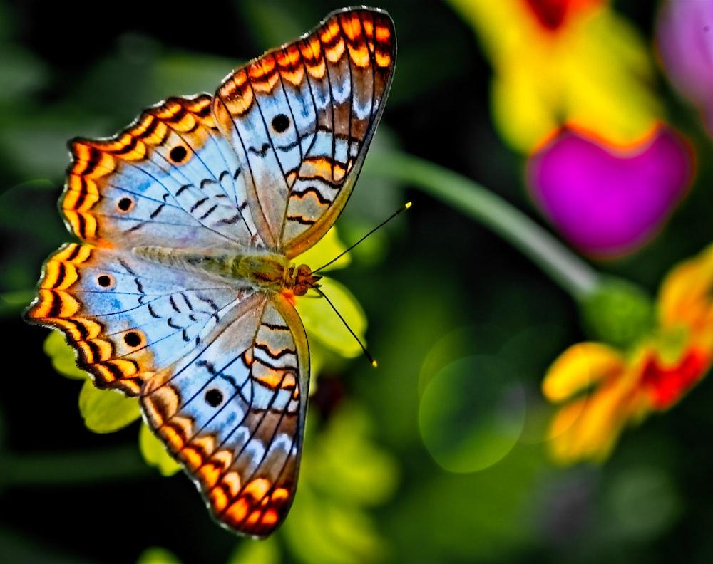 Butterfly Wallpapers Free Hd Download 500 Hq Unsplash Aesthetic glitter butterflies | cute laptop wallpaper. butterfly wallpapers free hd download