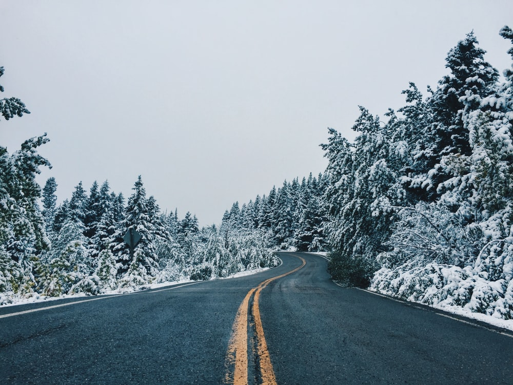 gray asphalt road between snow covered trees during daytime