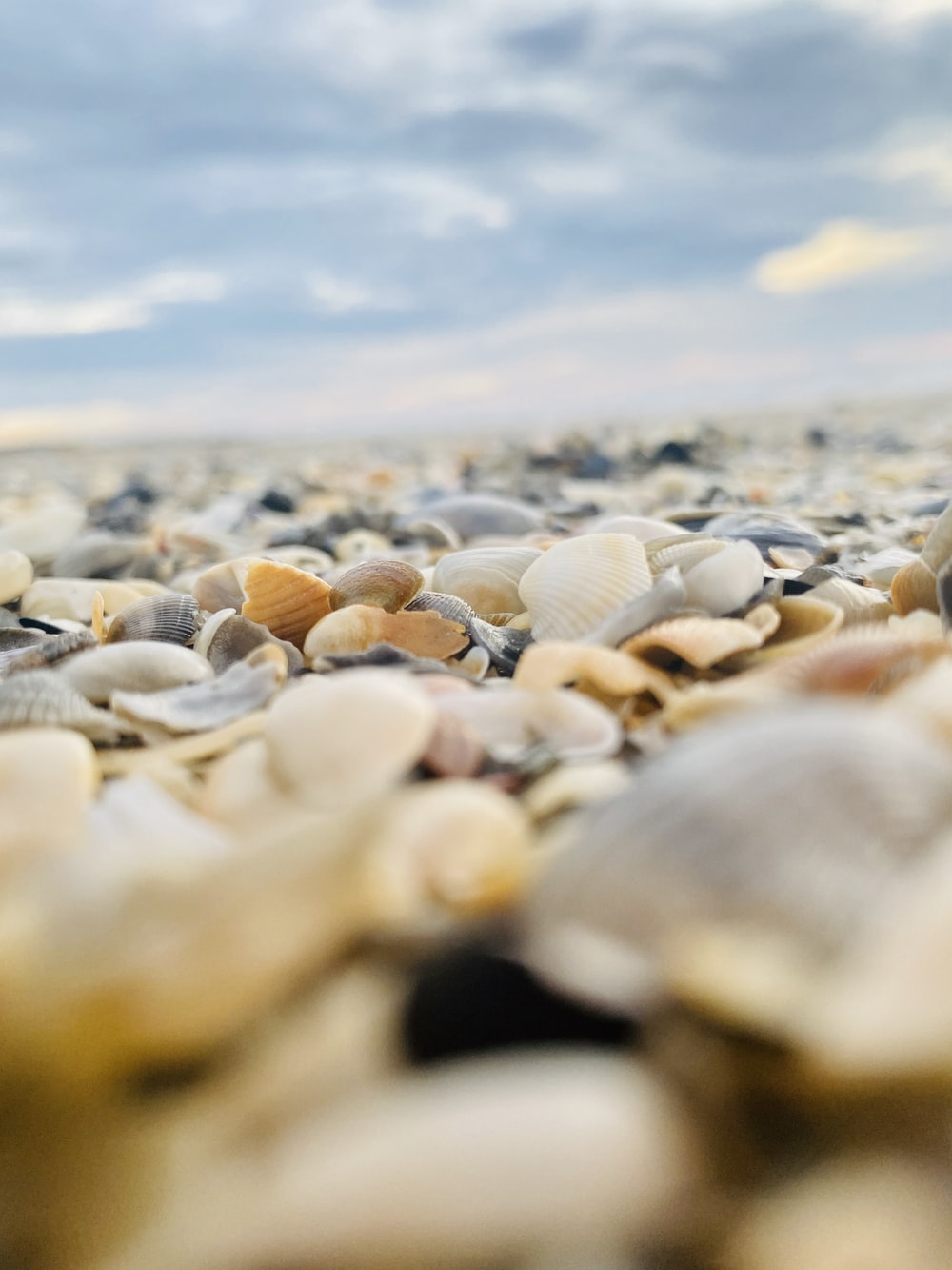 white and brown sea shells on shore during daytime