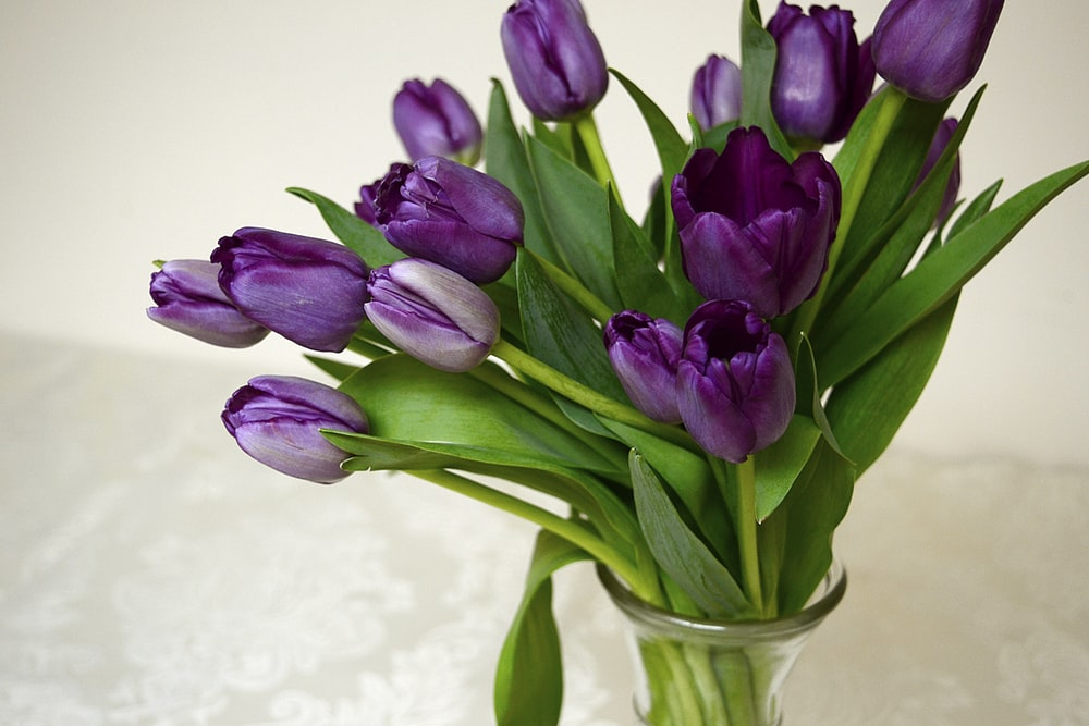 purple tulips in clear glass vase