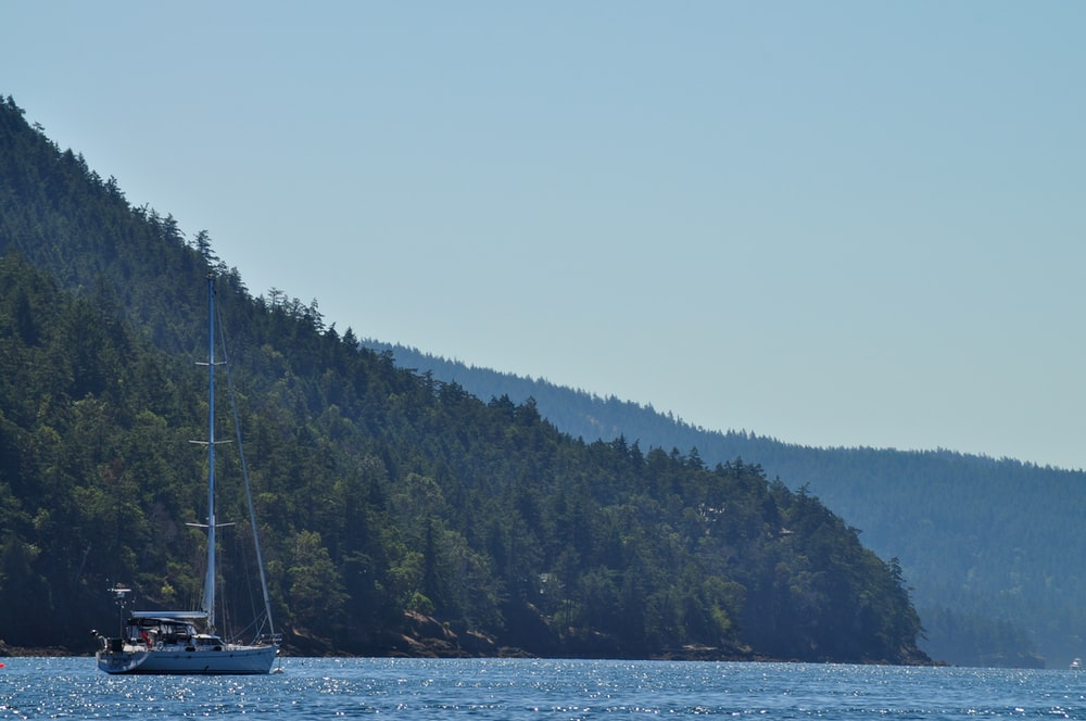 white sail boat on sea near green trees during daytime