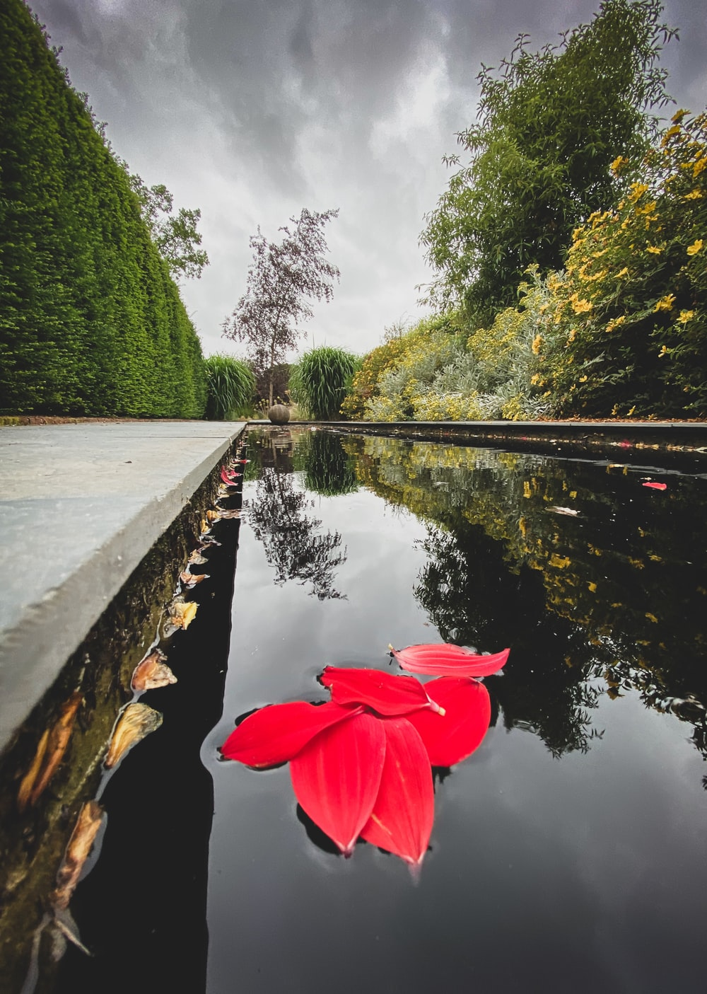 red flower near body of water during daytime