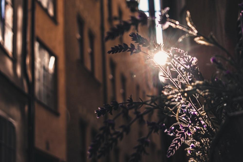 white string lights on tree