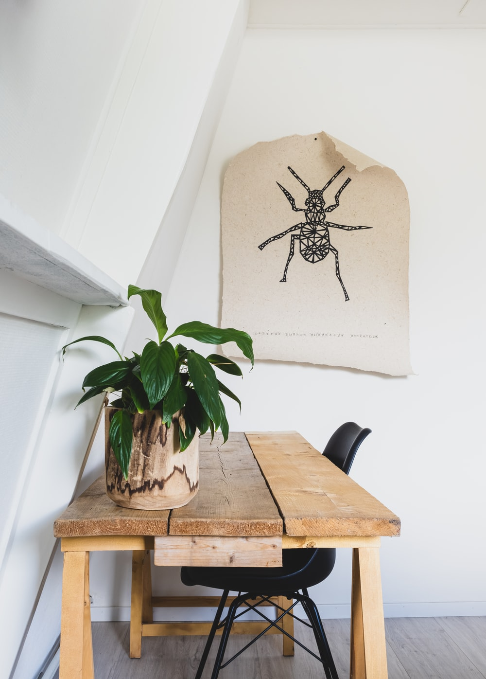 black spider on brown wooden table