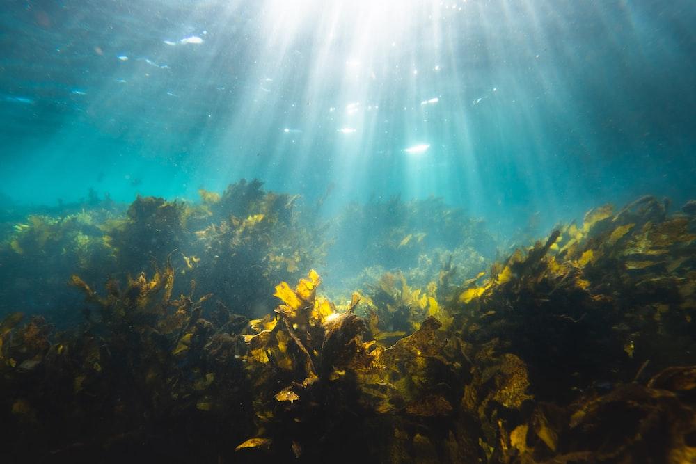brown coral reef under blue sky