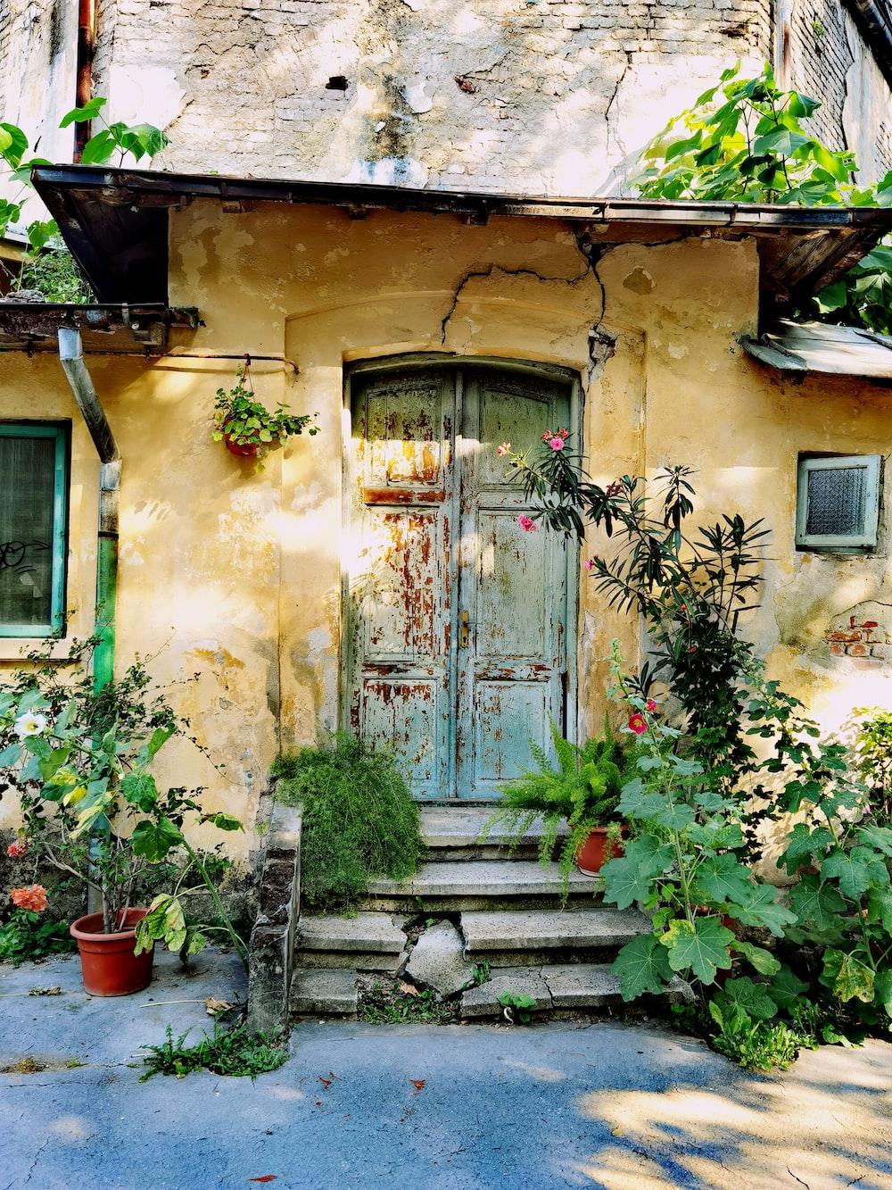 blue wooden door with green plants