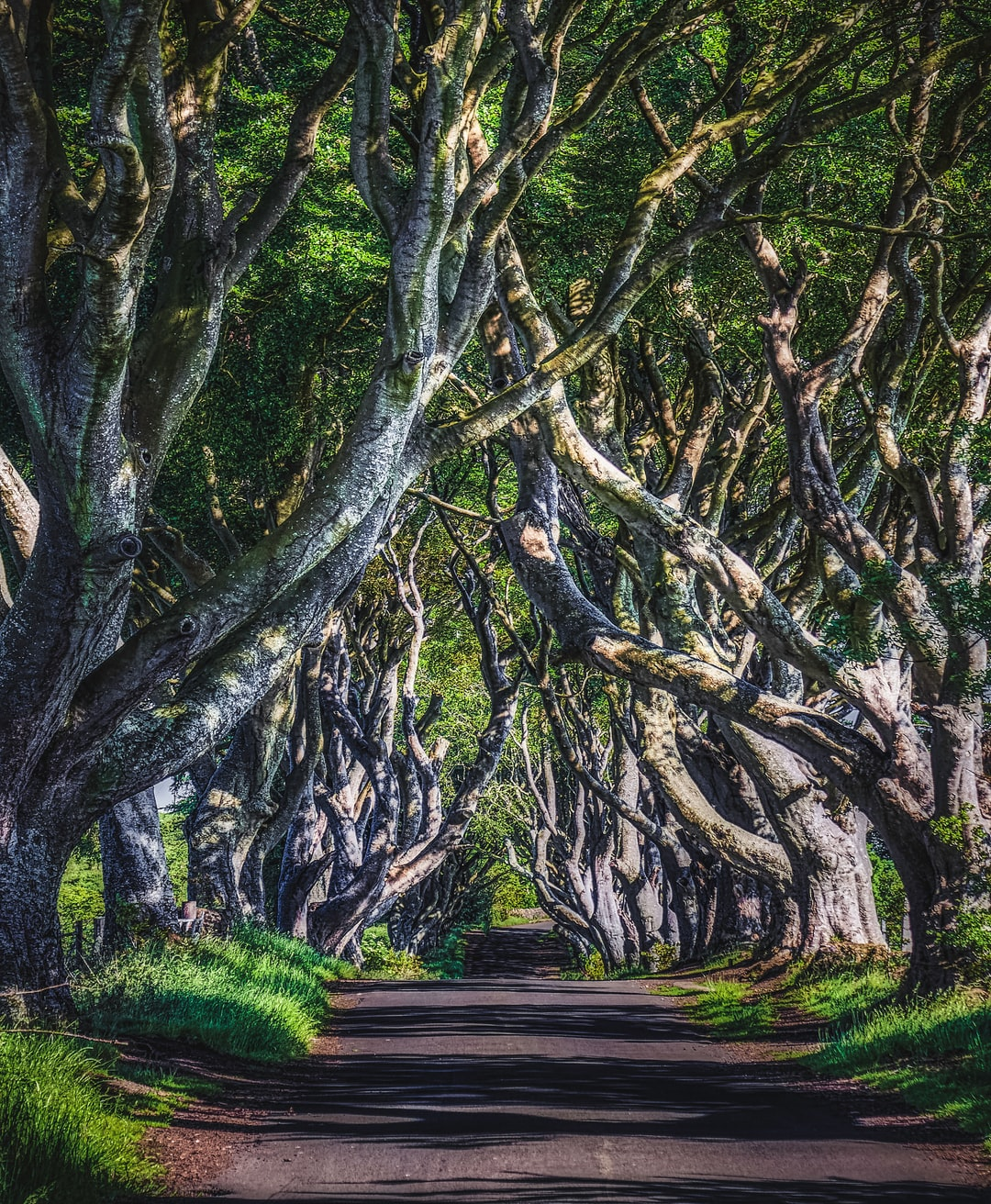 The Dark Hedges, famous as the King's Road from Game of Thrones, and also appearing in the movie, Transformers: The Last Knight (Jun., 2020).