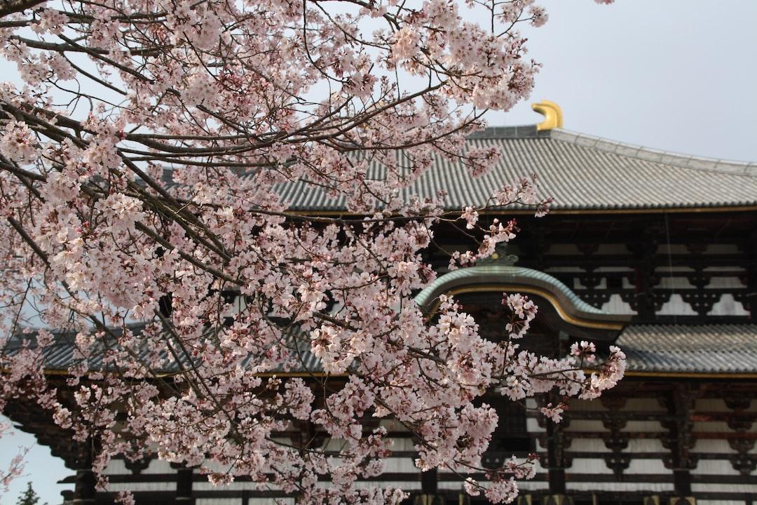 Cherry blossoms in Todaiji shrine, Nara.