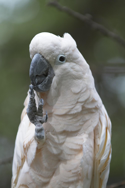 white bird on brown wooden stick