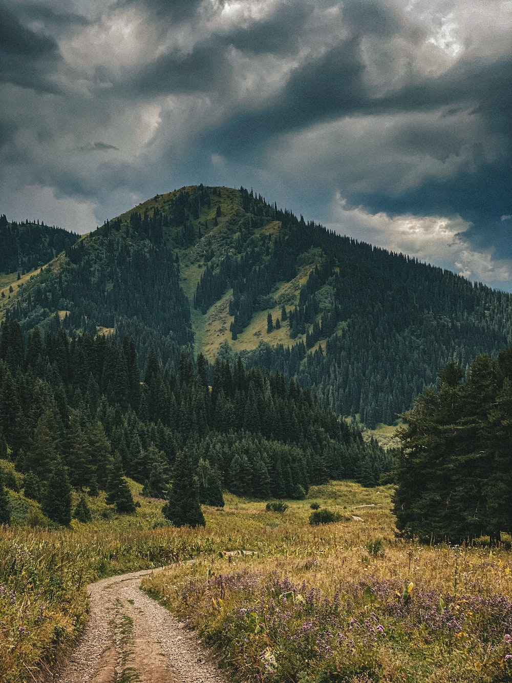 green trees on brown grass field near mountain under cloudy sky during daytime