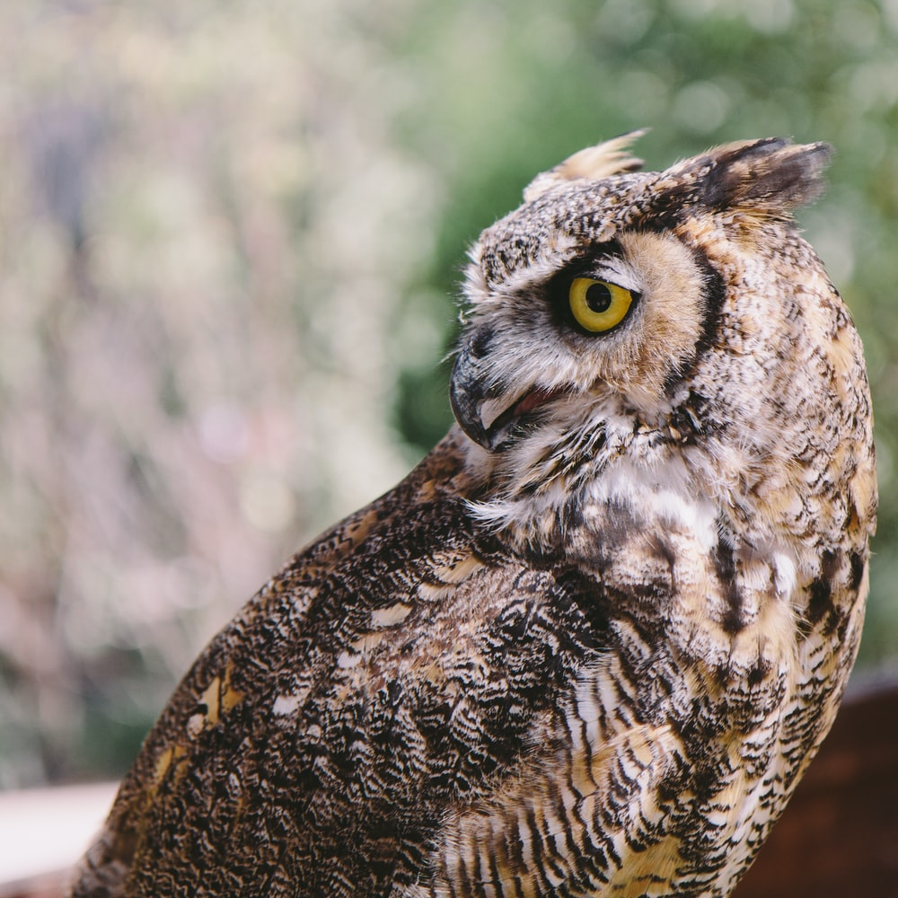 brown and white owl in close up photography