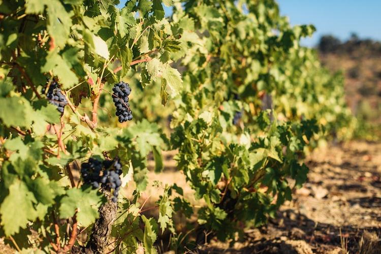 wine region near lisbon portugal
