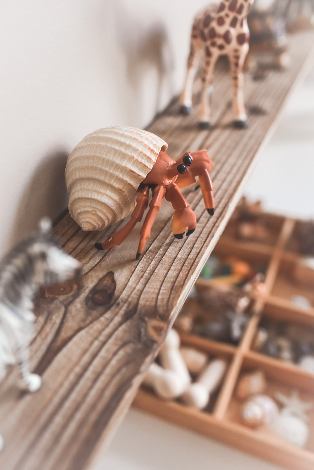 brown and white snail on brown wooden surface