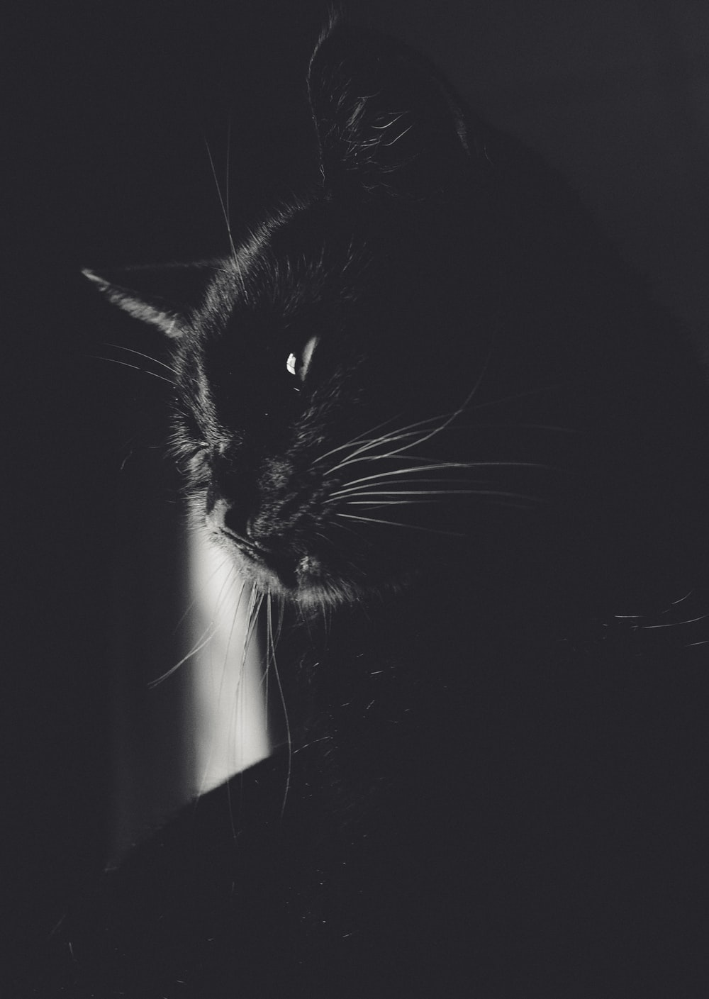 Cute Cats Pictures Download Free Images On Unsplash
