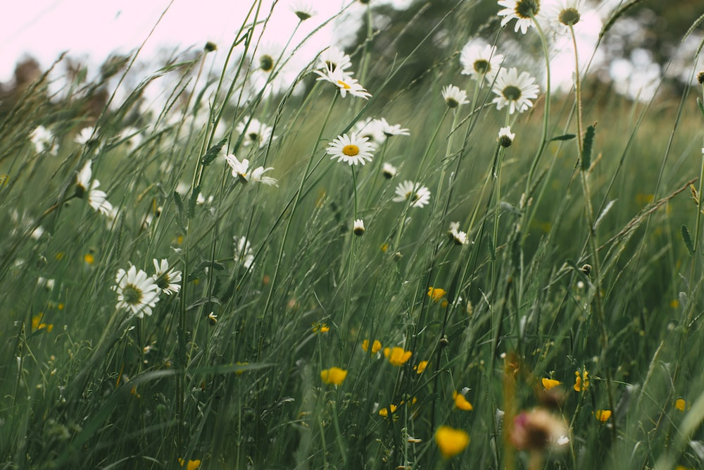 white and yellow flowers on green grass field