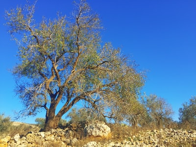 brown and green trees under blue sky during daytime palestine zoom background