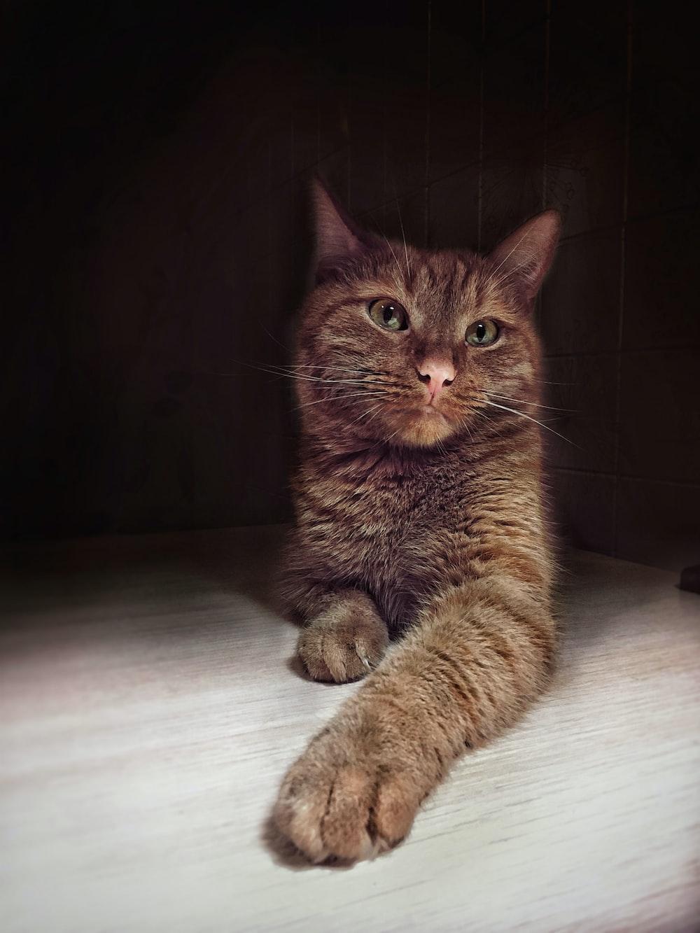 brown tabby cat lying on white floor