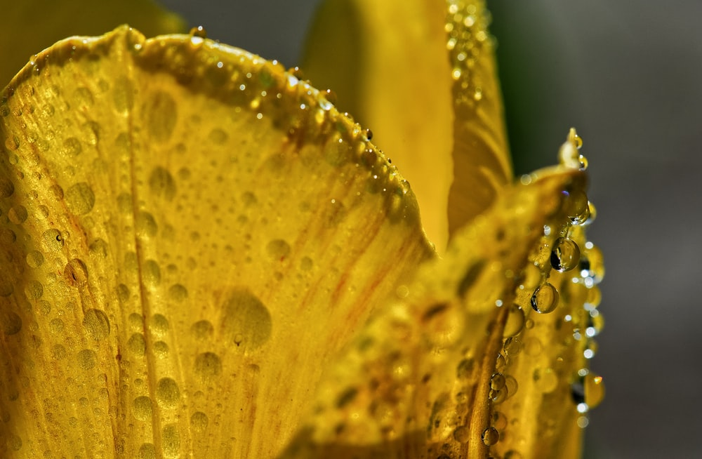 yellow and green flower with water droplets