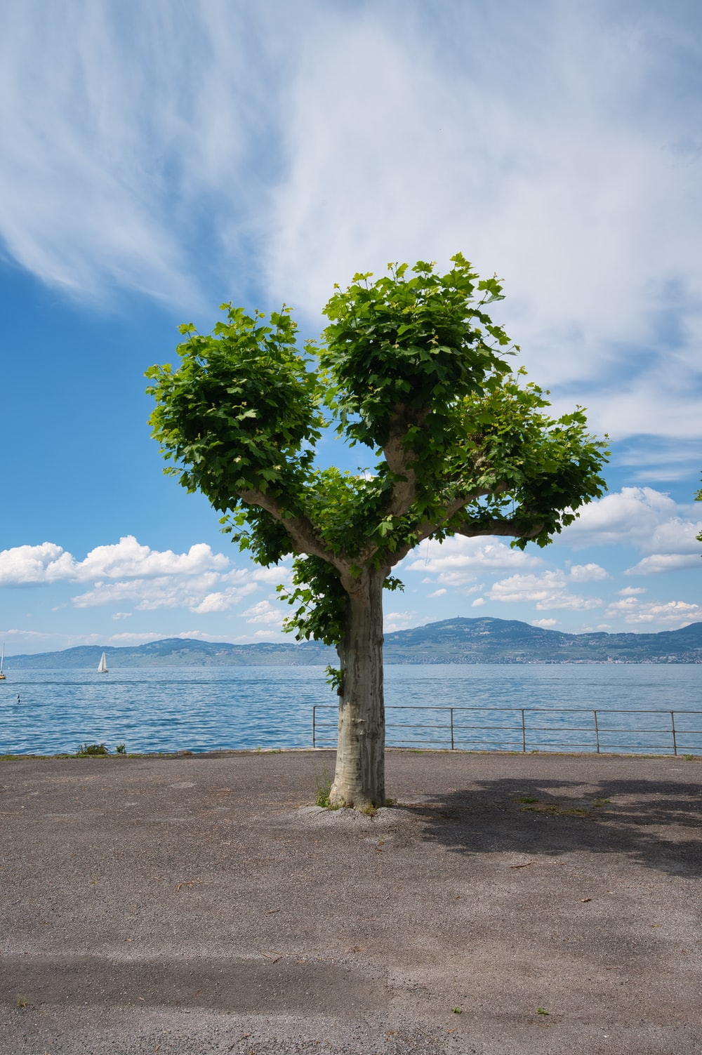 green tree near body of water during daytime