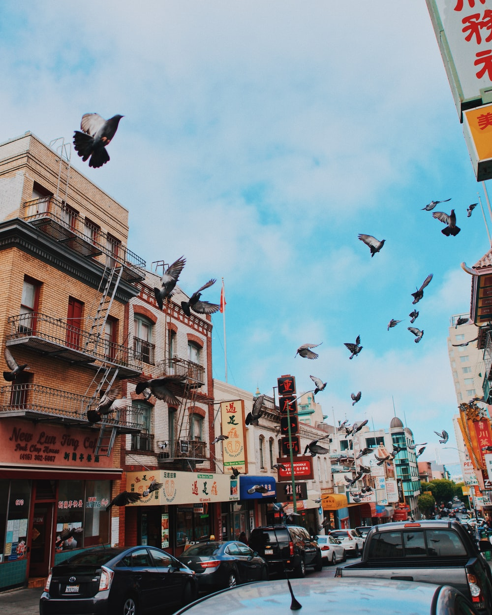 flock of birds flying over the buildings during daytime