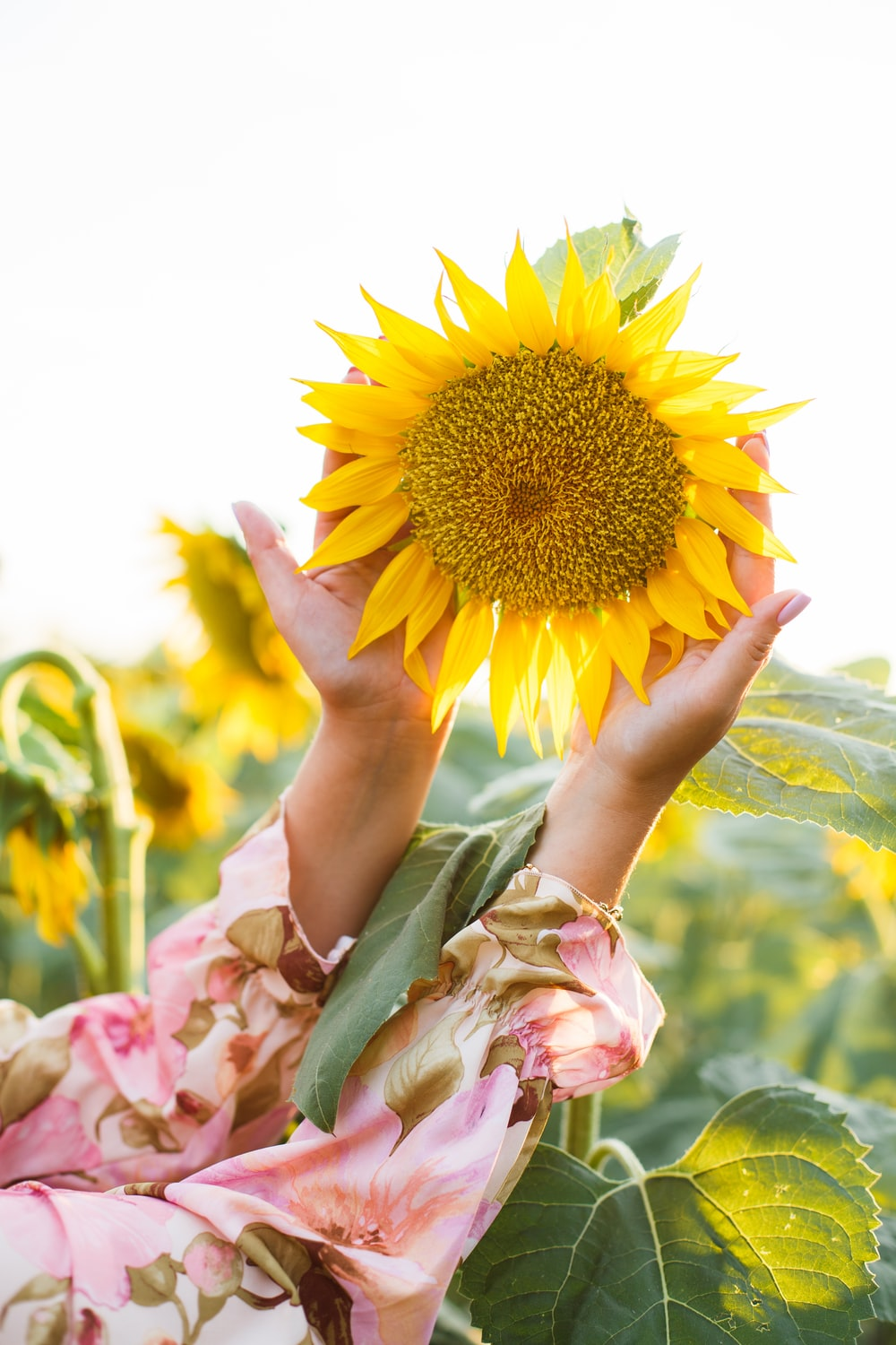 person holding sunflower during daytime