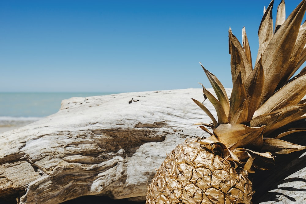 brown pineapple on white sand during daytime