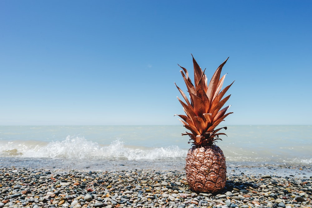 pineapple on beach shore during daytime