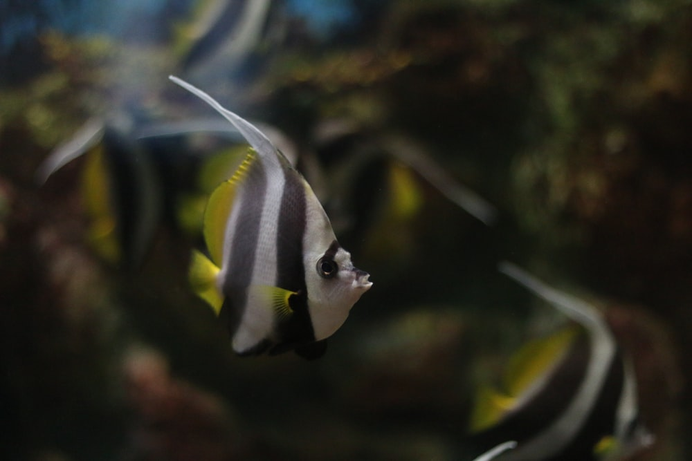 white and black fish in close up photography
