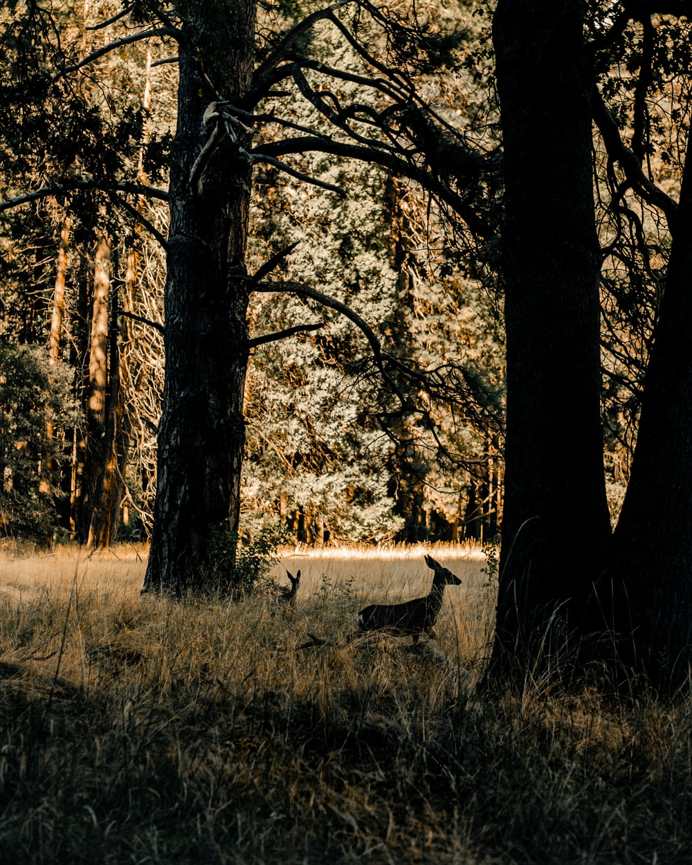 brown and white deer on brown grass field during daytime