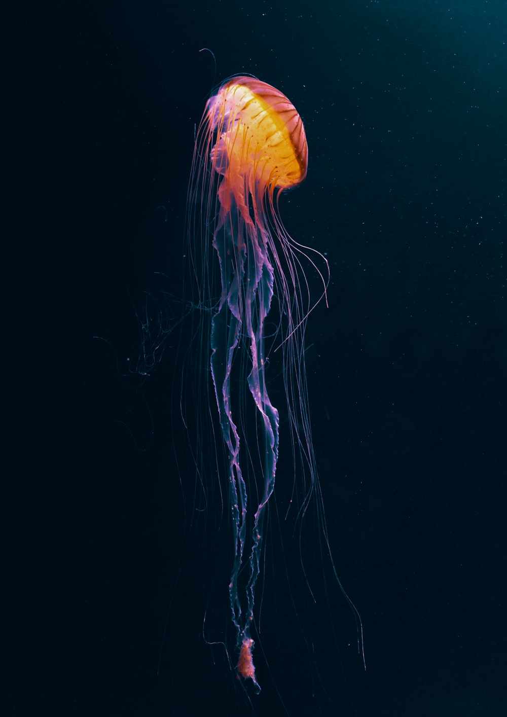 orange jellyfish in water during daytime