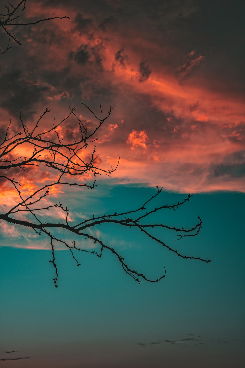 leafless tree under orange and blue sky